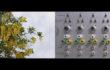 Kate Hammersley Flows (film still) film 6.5 minutes.